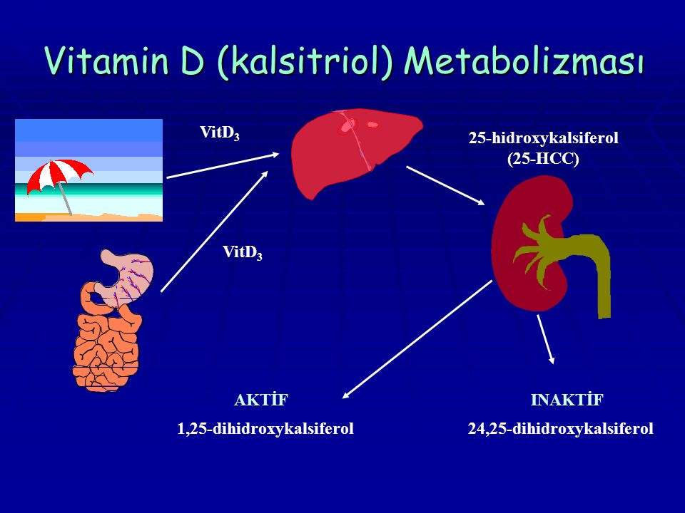 Vitamin D (kalsitriol) Metabolizması