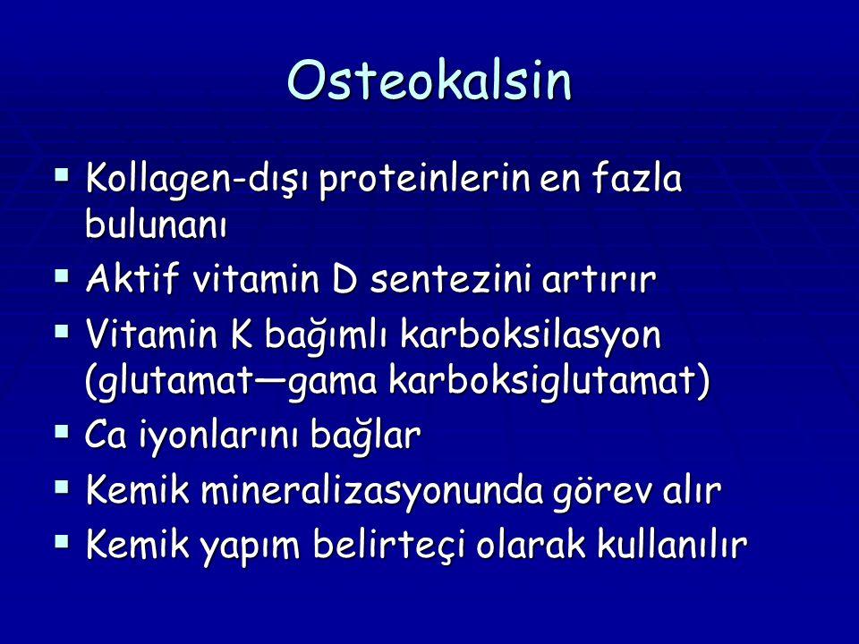 Osteokalsin Kollagen-dışı proteinlerin en fazla bulunanı