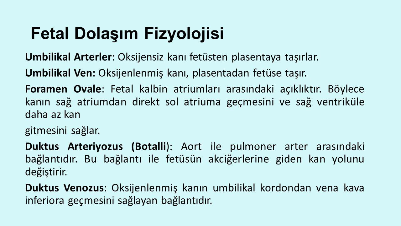 Fetal Dolaşım Fizyolojisi