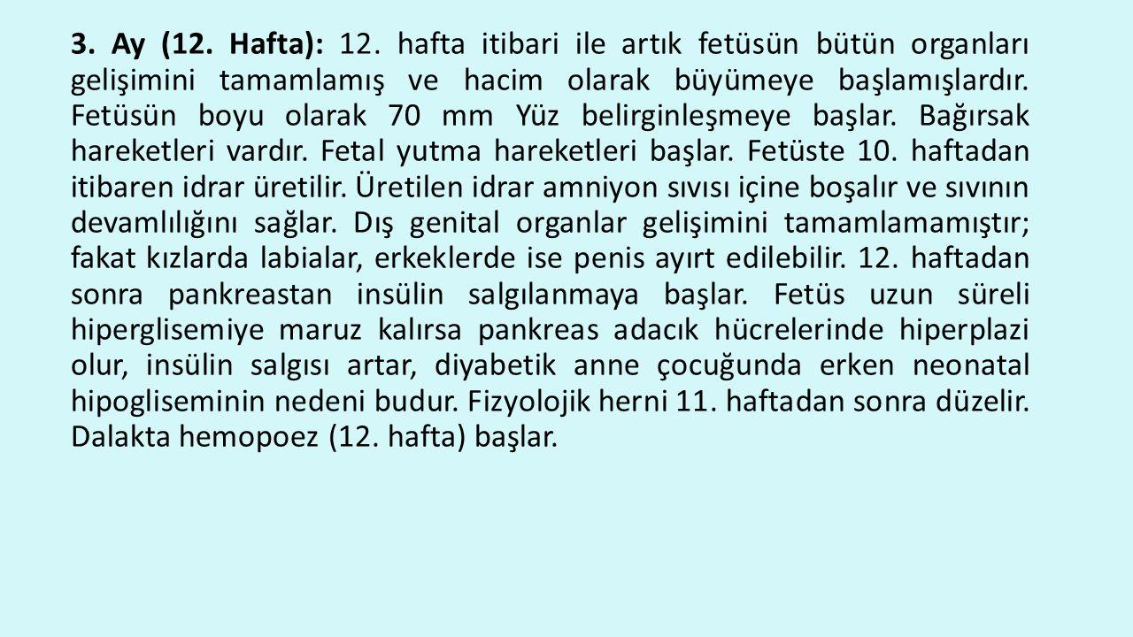 3. Ay (12. Hafta): 12.