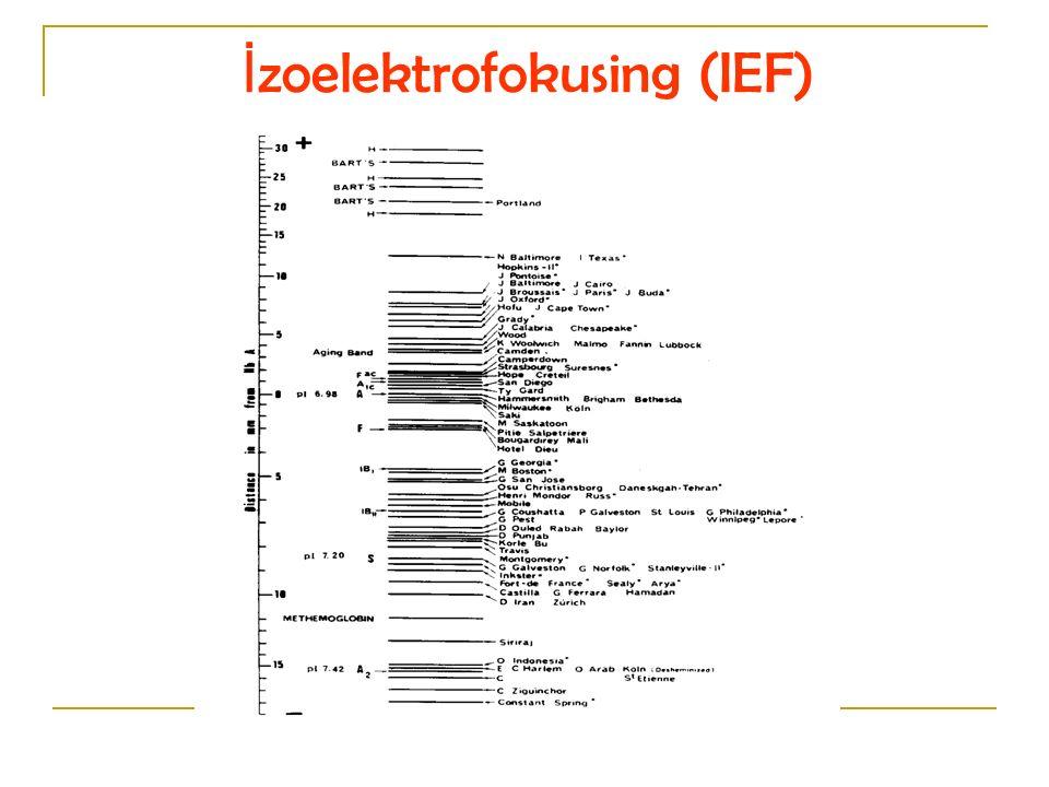 İzoelektrofokusing (IEF)