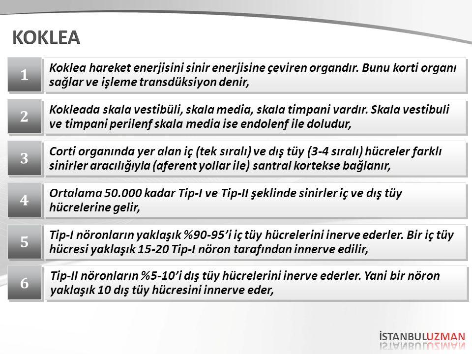 KOKLEA 1. Koklea hareket enerjisini sinir enerjisine çeviren organdır. Bunu korti organı sağlar ve işleme transdüksiyon denir,