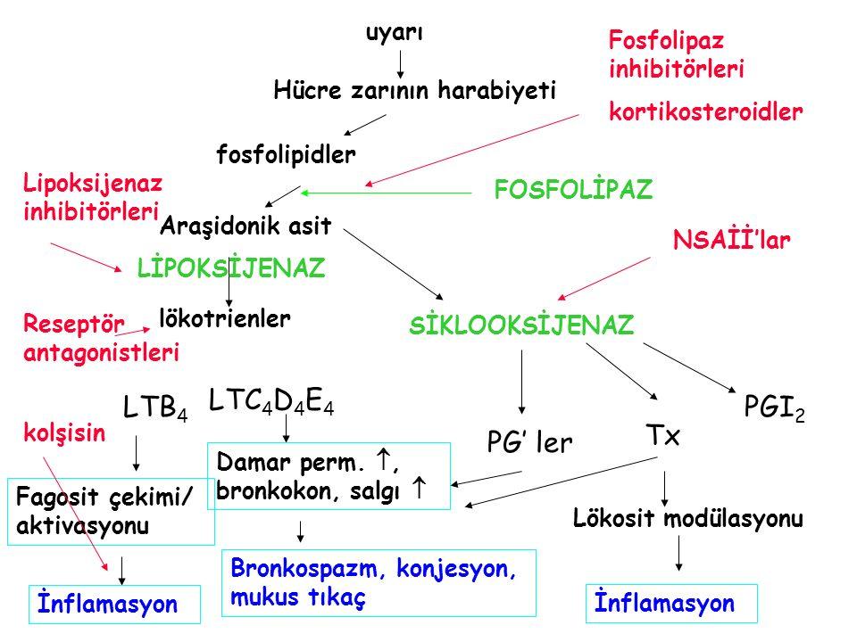 LTC4D4E4 LTB4 PGI2 Tx PG' ler uyarı Fosfolipaz inhibitörleri