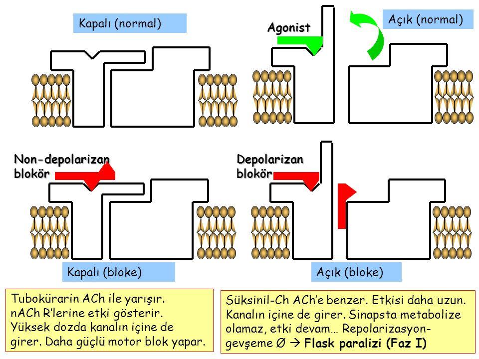 Açık (normal) Kapalı (normal) Agonist. Non-depolarizan blokör. Depolarizan blokör. Kapalı (bloke)