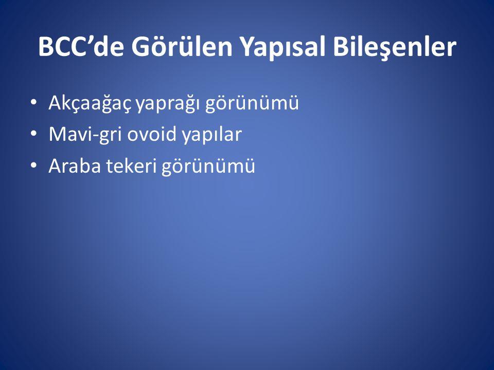 BCC'de Görülen Yapısal Bileşenler