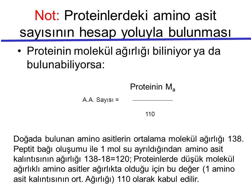 Not: Proteinlerdeki amino asit sayısının hesap yoluyla bulunması