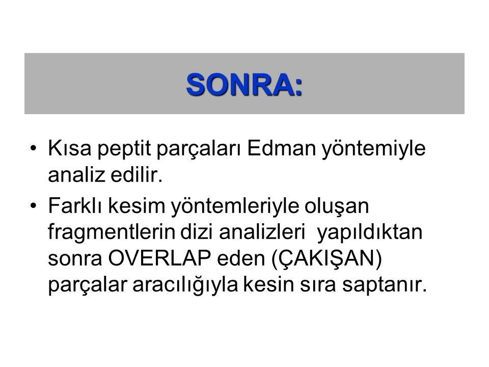 SONRA: Kısa peptit parçaları Edman yöntemiyle analiz edilir.