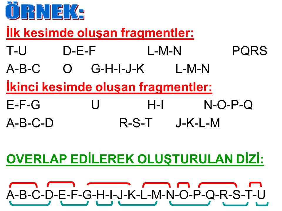 ÖRNEK: İlk kesimde oluşan fragmentler: T-U D-E-F L-M-N PQRS