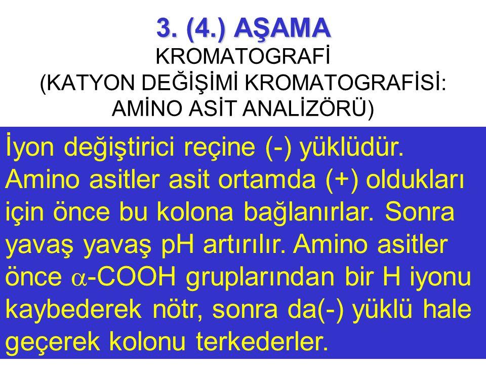 3. (4.) AŞAMA KROMATOGRAFİ (KATYON DEĞİŞİMİ KROMATOGRAFİSİ: AMİNO ASİT ANALİZÖRÜ)