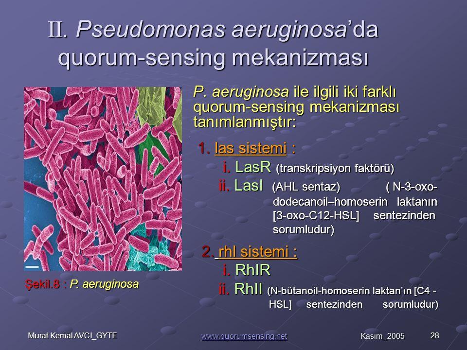 II. Pseudomonas aeruginosa'da quorum-sensing mekanizması