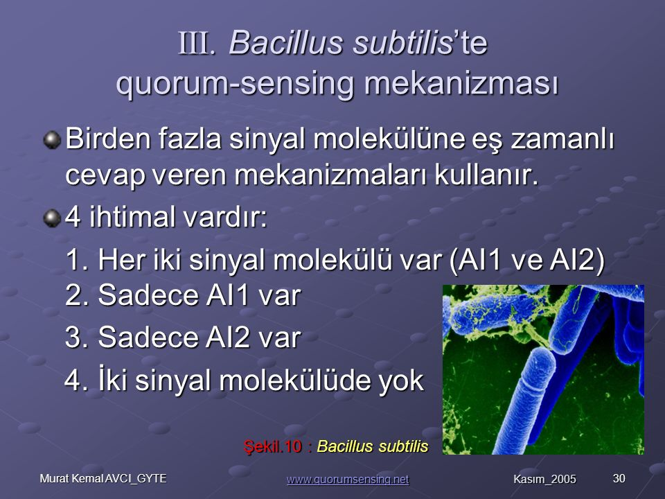 III. Bacillus subtilis'te quorum-sensing mekanizması