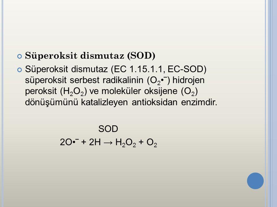 Süperoksit dismutaz (SOD)