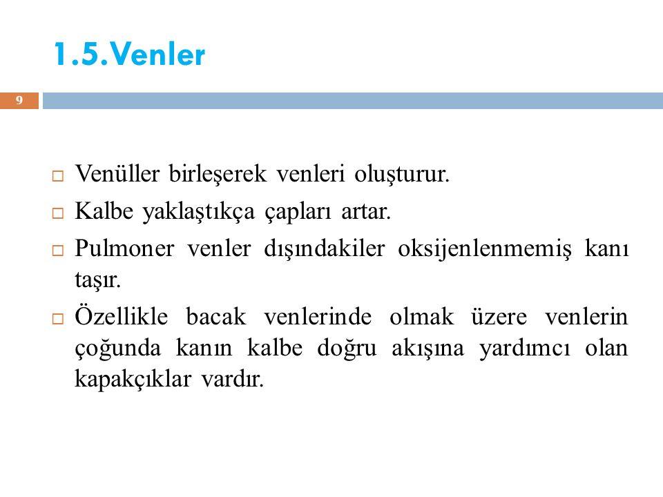 1.5.Venler Venüller birleşerek venleri oluşturur.