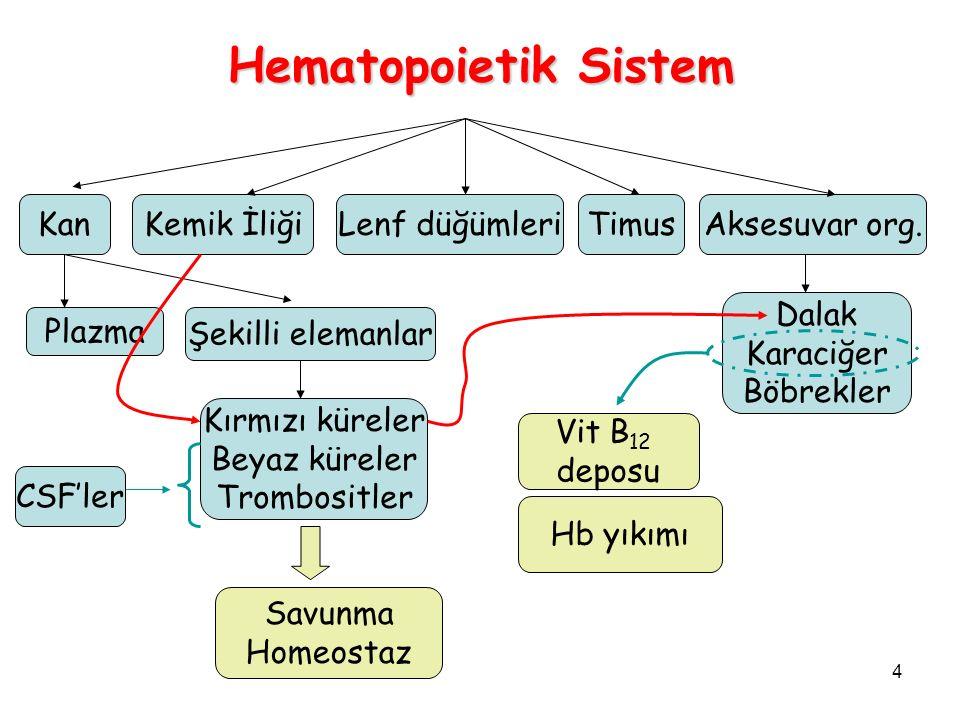 Hematopoietik Sistem Kan Kemik İliği Lenf düğümleri Timus