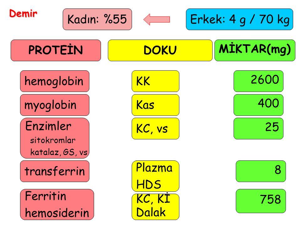 PROTEİN DOKU MİKTAR(mg)