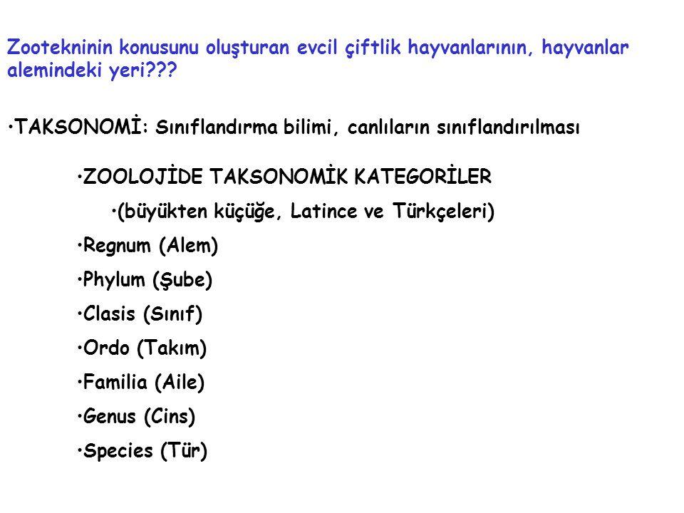 Zootekninin konusunu oluşturan evcil çiftlik hayvanlarının, hayvanlar alemindeki yeri