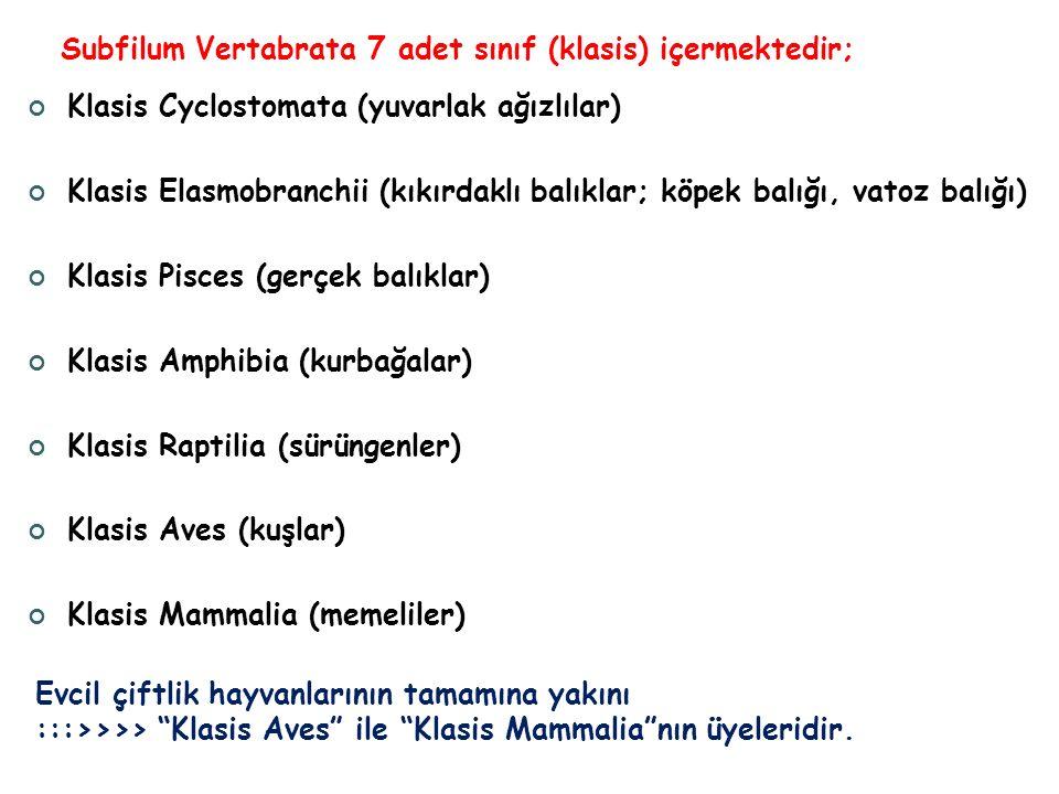 Subfilum Vertabrata 7 adet sınıf (klasis) içermektedir;