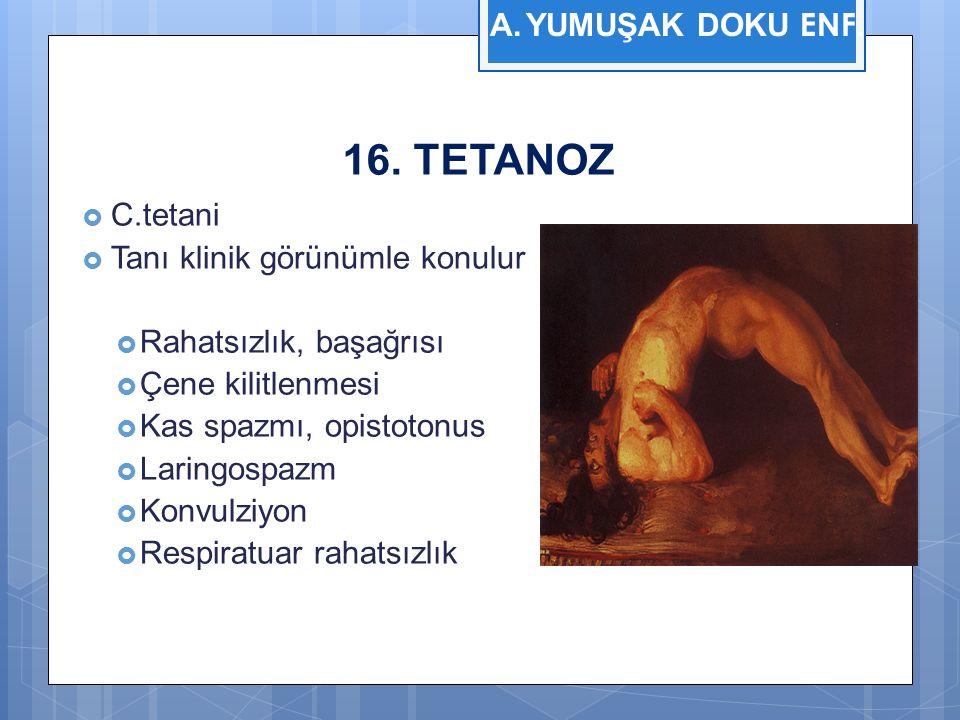 16. TETANOZ YUMUŞAK DOKU ENF. C.tetani Tanı klinik görünümle konulur