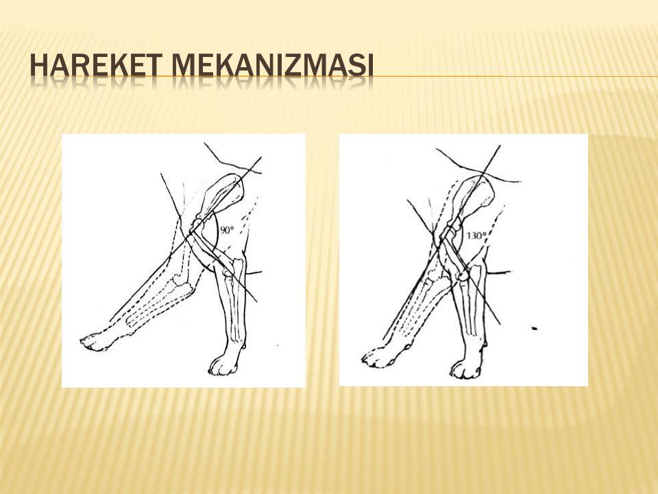 Hareket Mekanizmasi