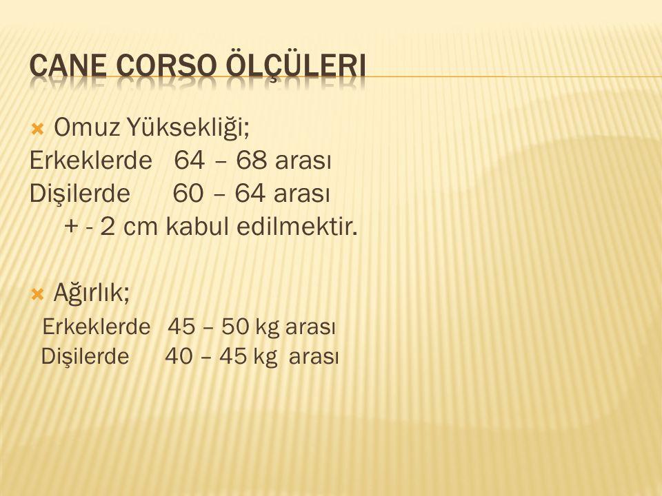 Cane corso ölçüleri Omuz Yüksekliği; Erkeklerde 64 – 68 arası