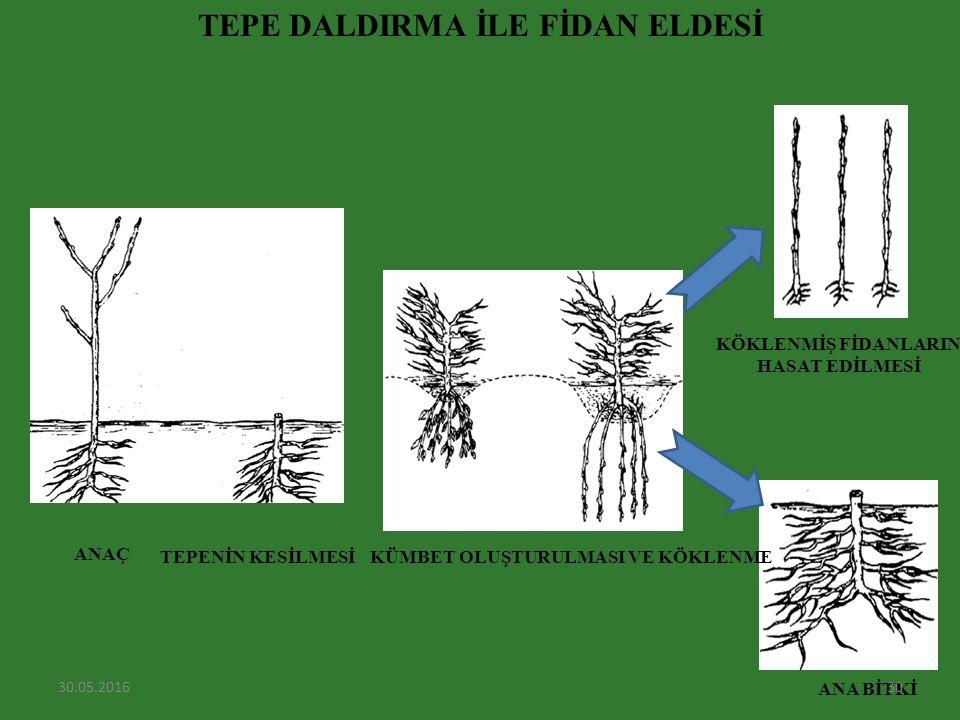 TEPE DALDIRMA İLE FİDAN ELDESİ