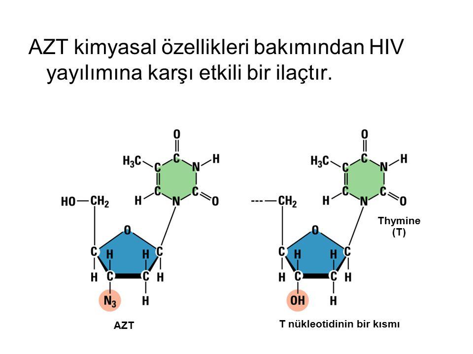 AZT kimyasal özellikleri bakımından HIV yayılımına karşı etkili bir ilaçtır.