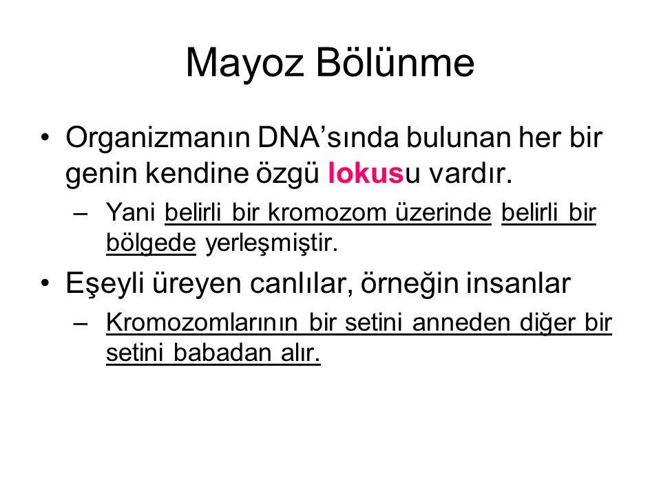 Mayoz Bölünme Organizmanın DNA'sında bulunan her bir genin kendine özgü lokusu vardır.