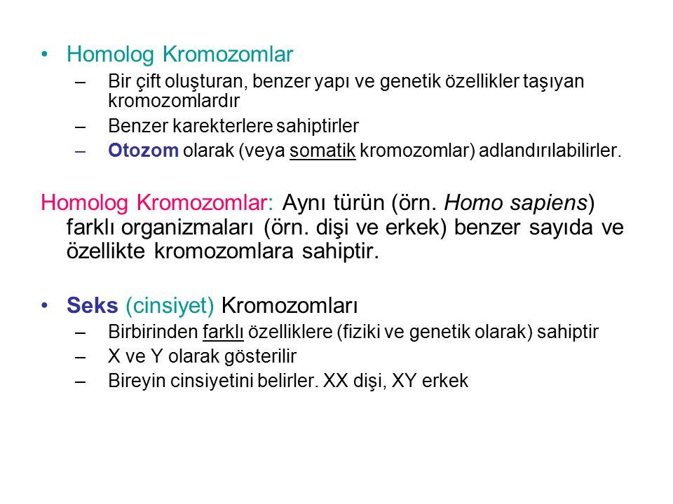 Seks (cinsiyet) Kromozomları