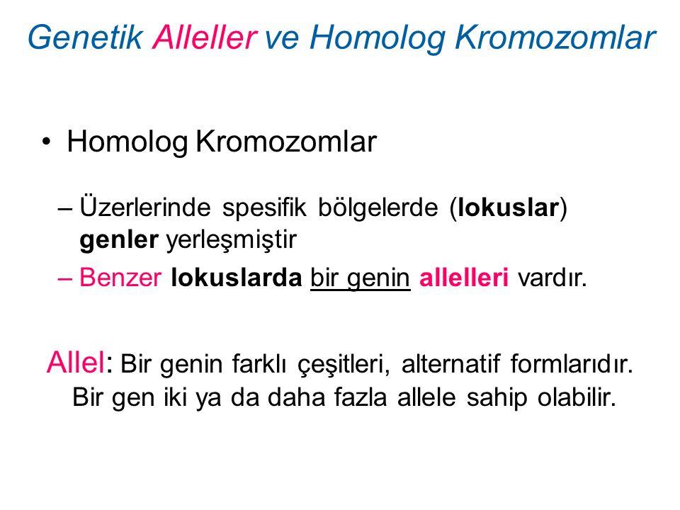Genetik Alleller ve Homolog Kromozomlar