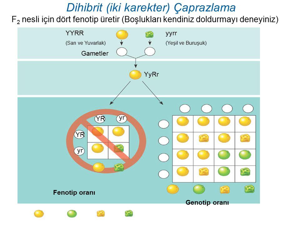 Dihibrit (iki karekter) Çaprazlama