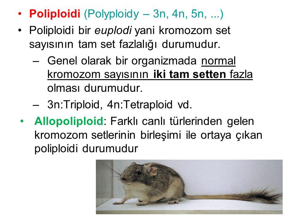 Poliploidi (Polyploidy – 3n, 4n, 5n, ...)
