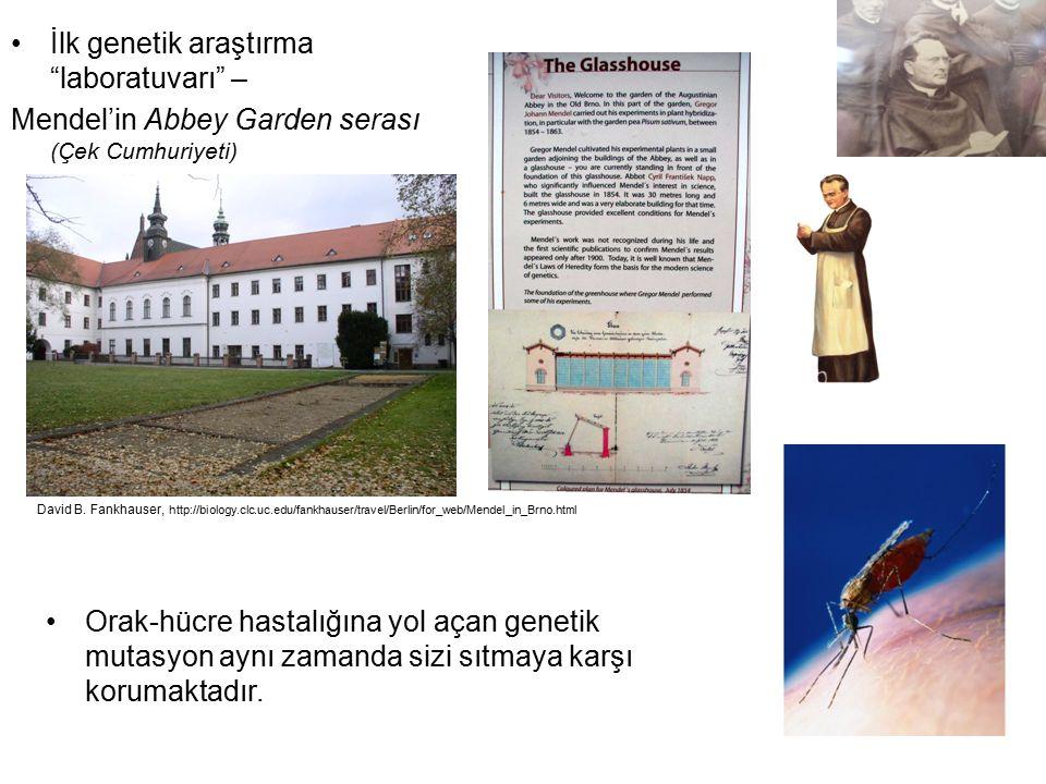 İlk genetik araştırma laboratuvarı –