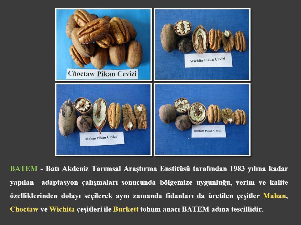 BATEM - Batı Akdeniz Tarımsal Araştırma Enstitüsü tarafından 1983 yılına kadar yapılan adaptasyon çalışmaları sonucunda bölgemize uygunluğu, verim ve kalite özelliklerinden dolayı seçilerek aynı zamanda fidanları da üretilen çeşitler Mahan, Choctaw ve Wichita çeşitleri ile Burkett tohum anacı BATEM adına tescillidir.