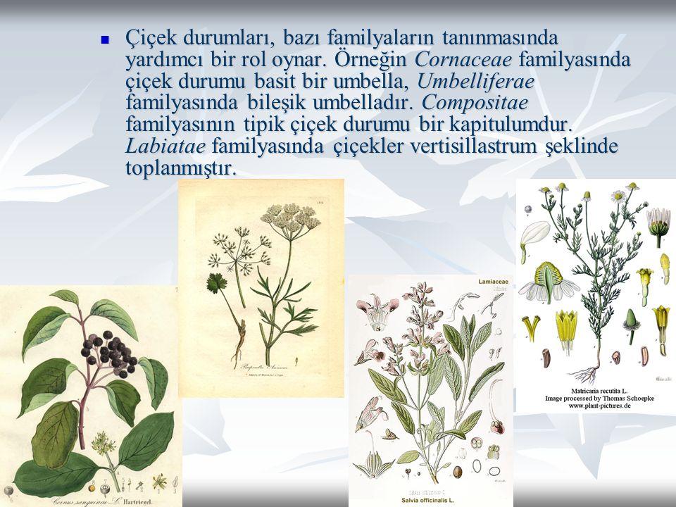 Çiçek durumları, bazı familyaların tanınmasında yardımcı bir rol oynar