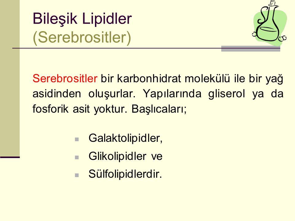 Bileşik Lipidler (Serebrositler)