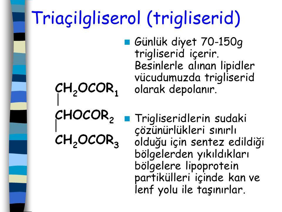 Triaçilgliserol (trigliserid)