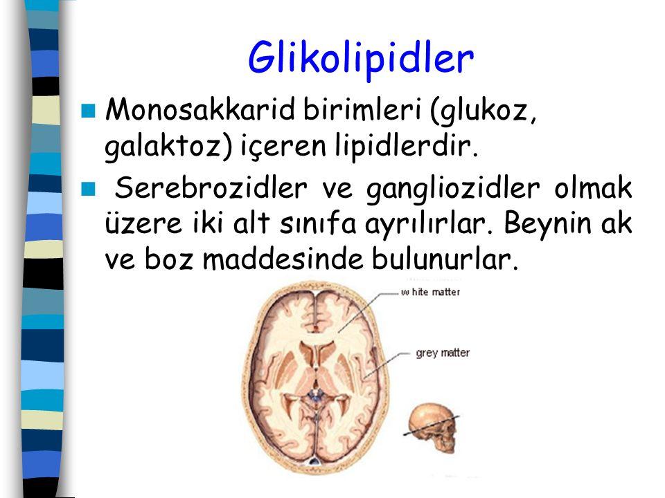Glikolipidler Monosakkarid birimleri (glukoz, galaktoz) içeren lipidlerdir.