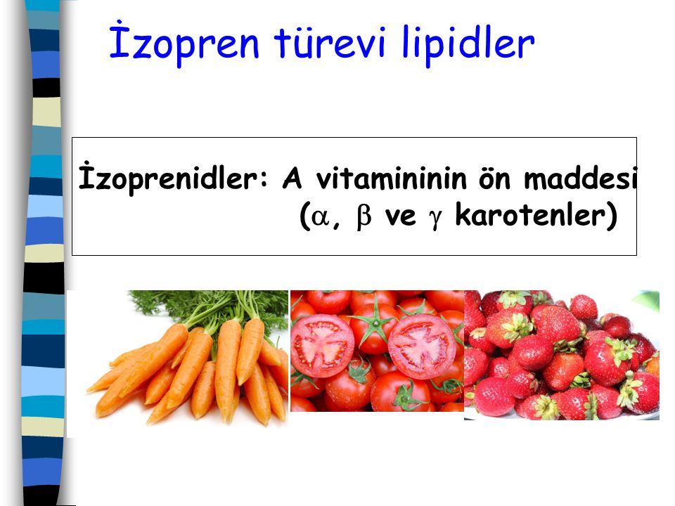 İzopren türevi lipidler