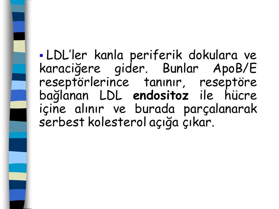 LDL'ler kanla periferik dokulara ve karaciğere gider