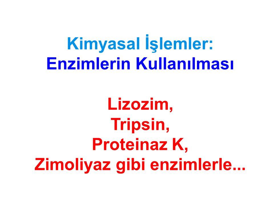 Enzimlerin Kullanılması Zimoliyaz gibi enzimlerle...