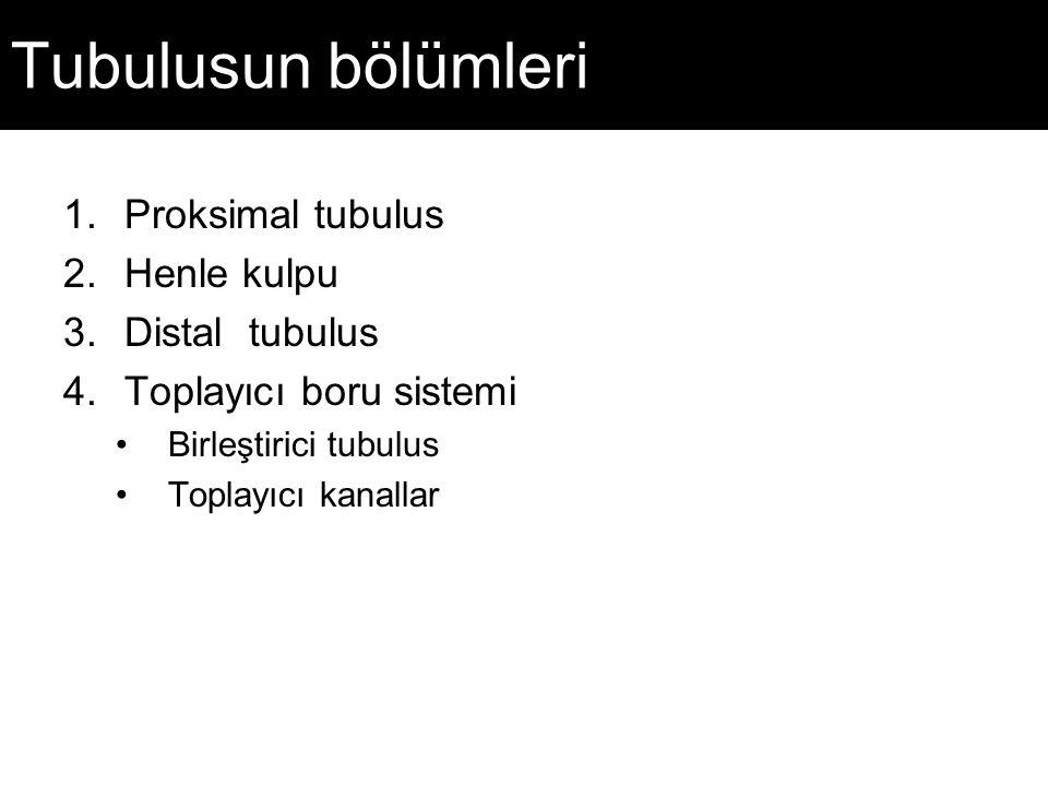 Tubulusun bölümleri Proksimal tubulus Henle kulpu Distal tubulus