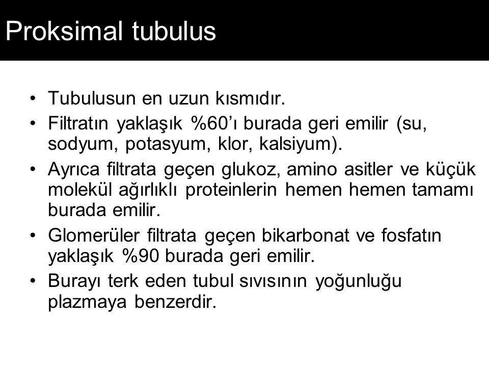 Proksimal tubulus Tubulusun en uzun kısmıdır.