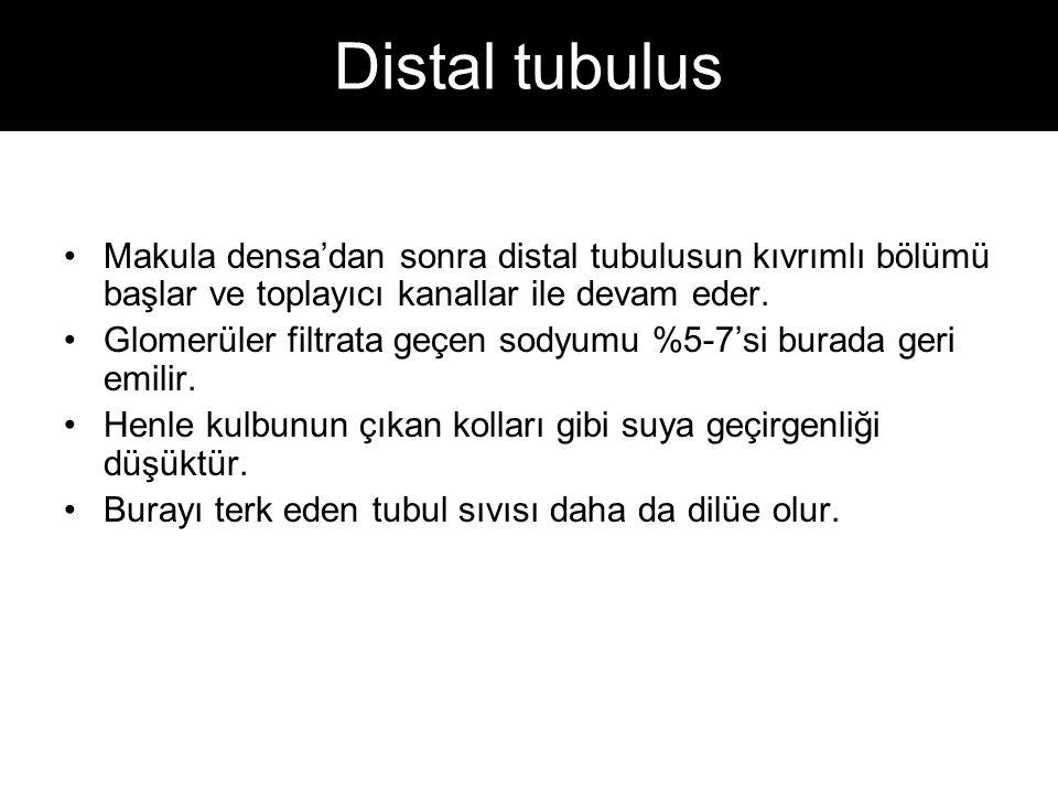 Distal tubulus Makula densa'dan sonra distal tubulusun kıvrımlı bölümü başlar ve toplayıcı kanallar ile devam eder.