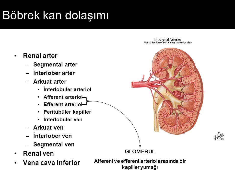 Afferent ve efferent arteriol arasında bir kapiller yumağı
