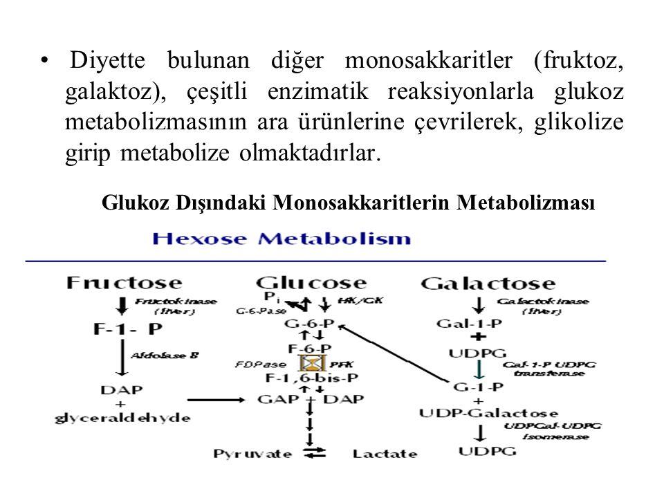 Glukoz Dışındaki Monosakkaritlerin Metabolizması