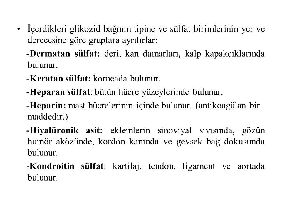 İçerdikleri glikozid bağının tipine ve sülfat birimlerinin yer ve derecesine göre gruplara ayrılırlar: