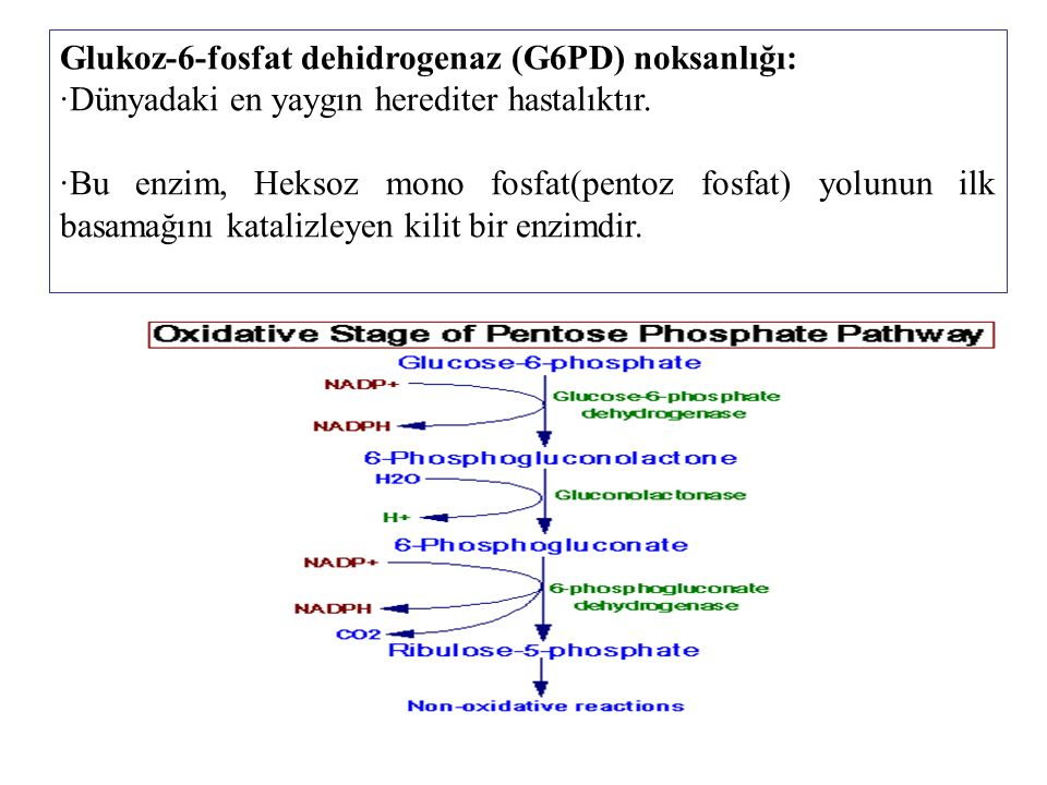 Glukoz-6-fosfat dehidrogenaz (G6PD) noksanlığı: