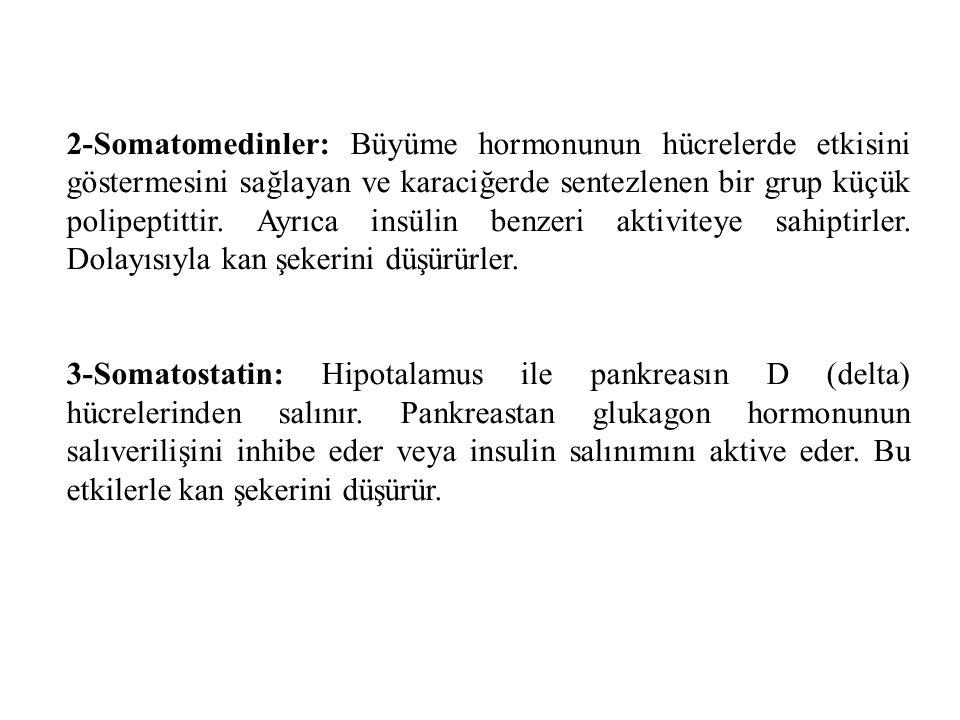 2-Somatomedinler: Büyüme hormonunun hücrelerde etkisini göstermesini sağlayan ve karaciğerde sentezlenen bir grup küçük polipeptittir. Ayrıca insülin benzeri aktiviteye sahiptirler. Dolayısıyla kan şekerini düşürürler.