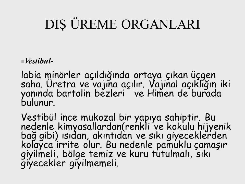 DIŞ ÜREME ORGANLARI Vestibul-