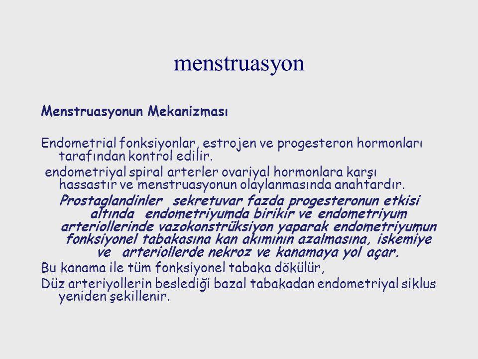 menstruasyon Menstruasyonun Mekanizması